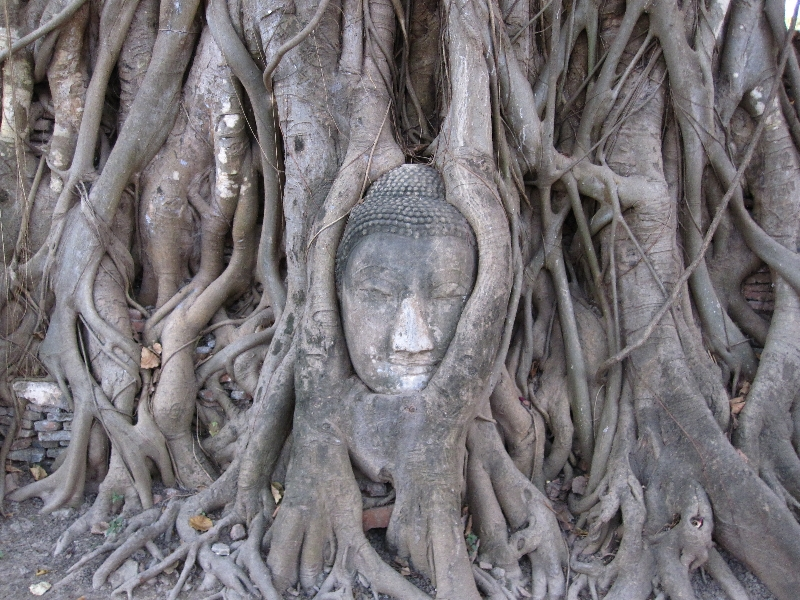buddhas-head-in-a-tree-at-wat-phra-mahathat
