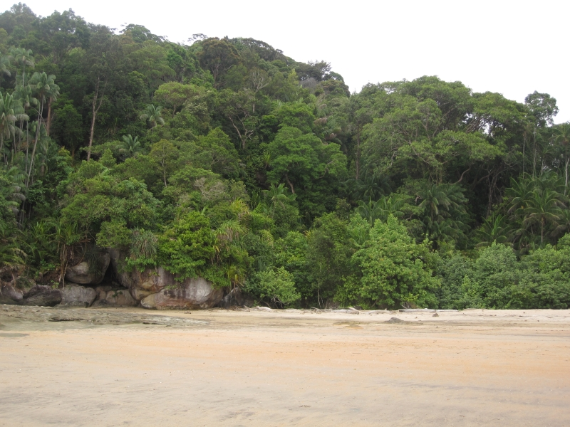 rainforest-and-beach