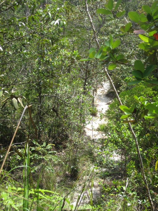 telok-pandan-kecil-trail