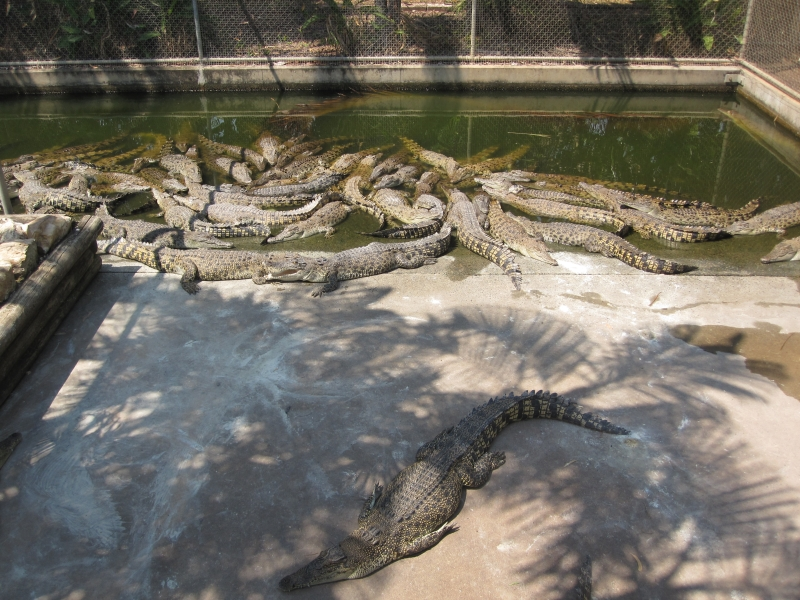 darwin-crocodile-park