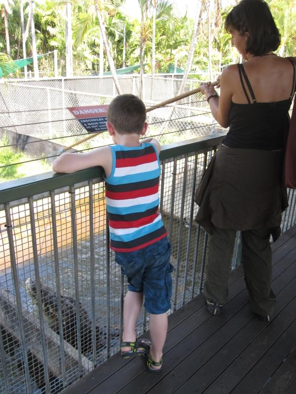 feeding-a-crocodile