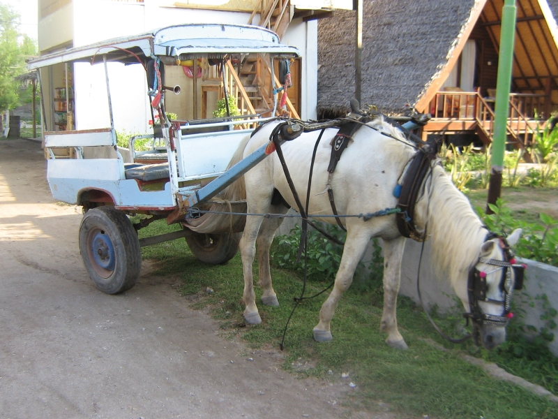 no-cars-on-gili-but-horse-buggys