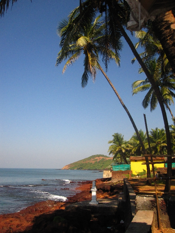 palmtrees-at-anjuna-beach