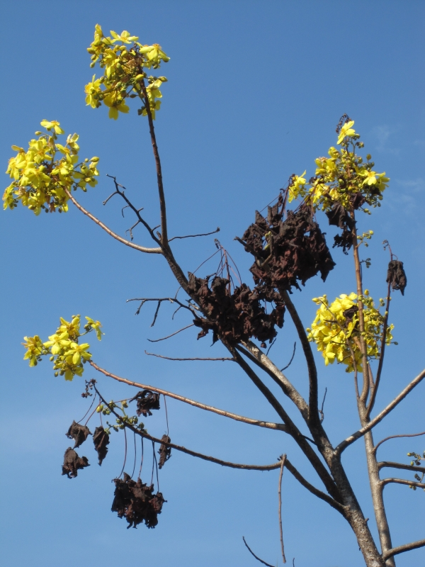 flowering-in-the-dry-northern-territory