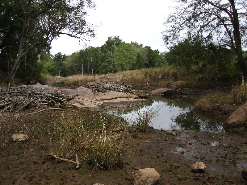 kanha-landscape