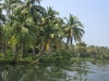 the-backwaters-just-beautyful