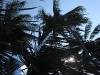 palmtrees-in-the-sun-koh-phangan