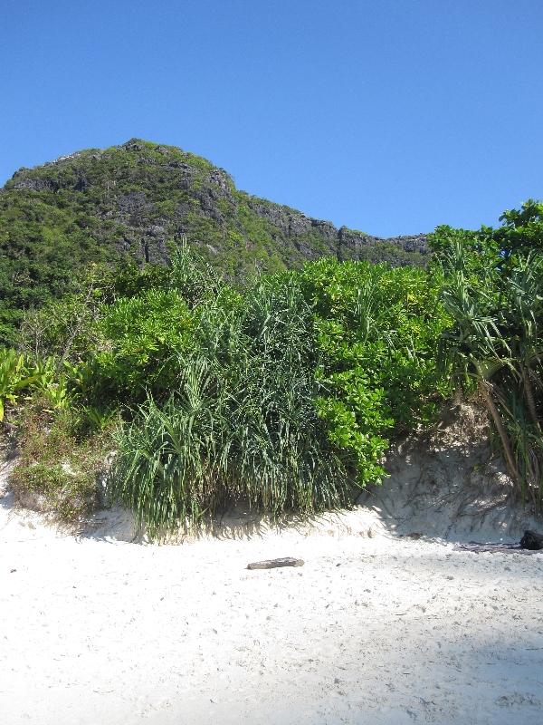 white-sand-at-maya-bay