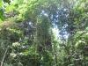 rainforest-of-gunung-gading-np