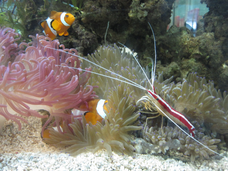 aquarium-airport-kota-kinabalu