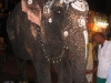 an-elephant-at-sri-meenakshi-temple