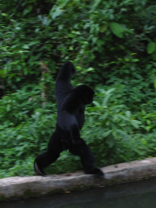 walking-monkey