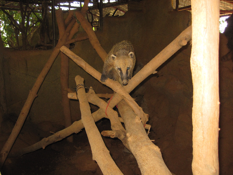 we-build-this-climbing-frame-for-the-coati