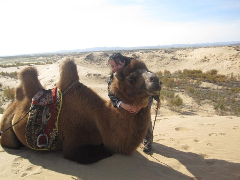 a-camel-and-the-minigobi