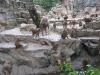 hamadryas-baboon-singapore-zoo