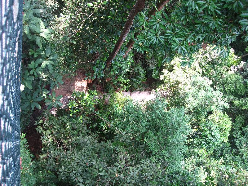 high-canopy-walkway