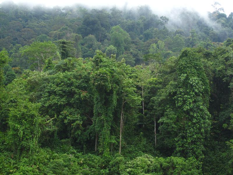 on-the-way-to-taman-negara-national-park