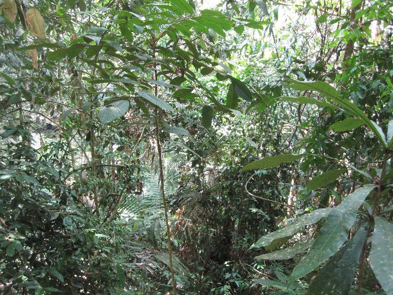the-jungle-in-taman-negara-in-malaysia-is-extra-dense