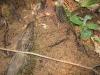 wild-life-in-taman-negara-termites