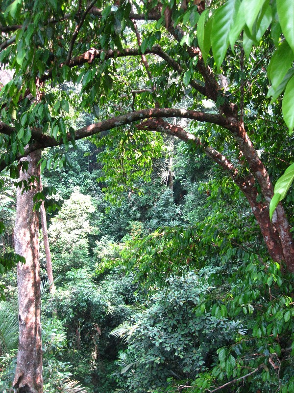 view-from-the-canopy-of-taman-negara