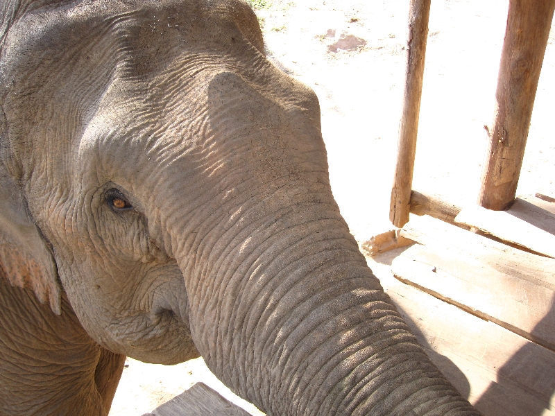 our-elefant