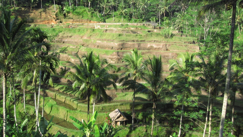 amazing-rice-terraces-of-tegallalang