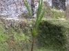 coconut-tree-junior