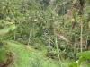 rice-terrace-gunug-kawi-temple