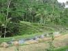 ricefields-near-the-gunug-kawi-temple