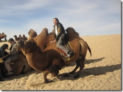 Camels standing up is a littel crazy