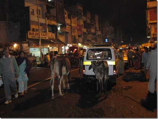 Cows on Indian streets