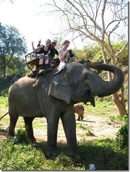 elefant riding