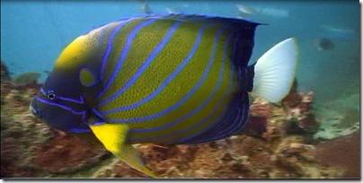 Koh Tao - die Fisch Insel Thailands