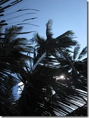 Palmen an einem Strand in Thailand