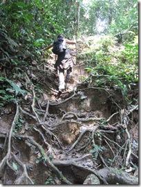 Die Natur bildet Treppen im Regenwald