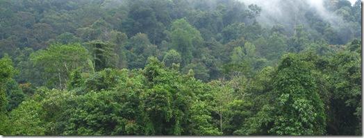 Ein Blick in den Dschungel