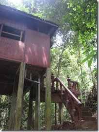 A home in the rainforest