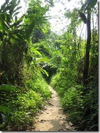 Wandern im Urwald in Malaysia