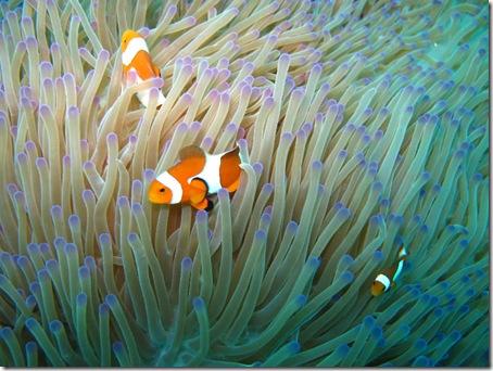 Nemo - Tauchen Mabul