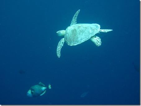 Sipadan - Heimat der Schildkröten
