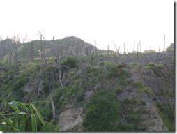 Verbrannte Bäume bei Merapi auf Java