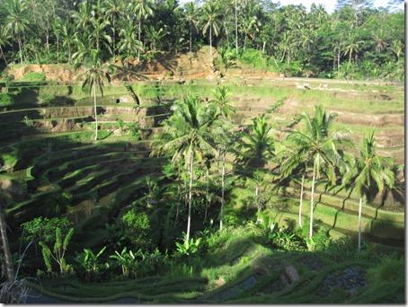 Rizières en terrasses de Tegallalang - Bali