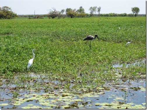 Birds in Yellow Waters