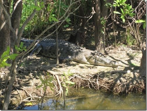 Yellow Waters - wild saltwater crocodile